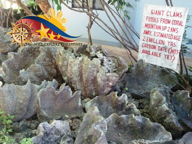 Giant Clam in Enchanted Cave at Bolinao Pangasinan